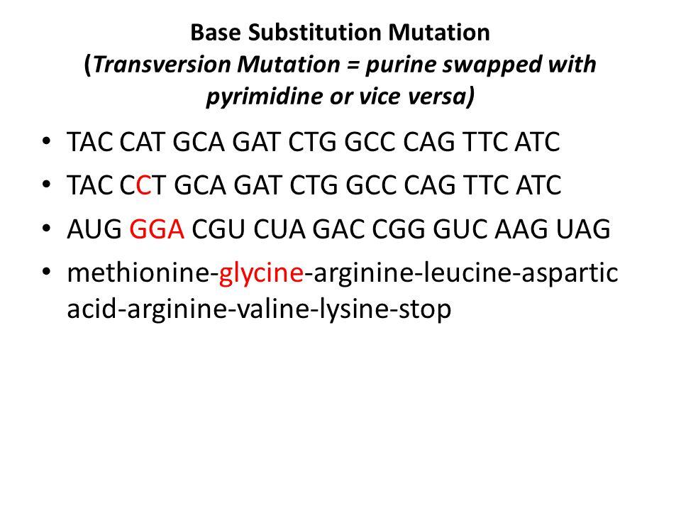 Gene Mutations Worksheet Ppt Download. Worksheet. Mutations Worksheet At Mspartners.co