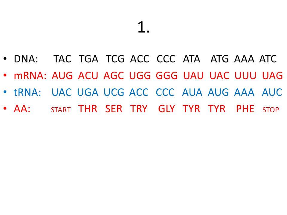 Transcription Translation Worksheet 2 1
