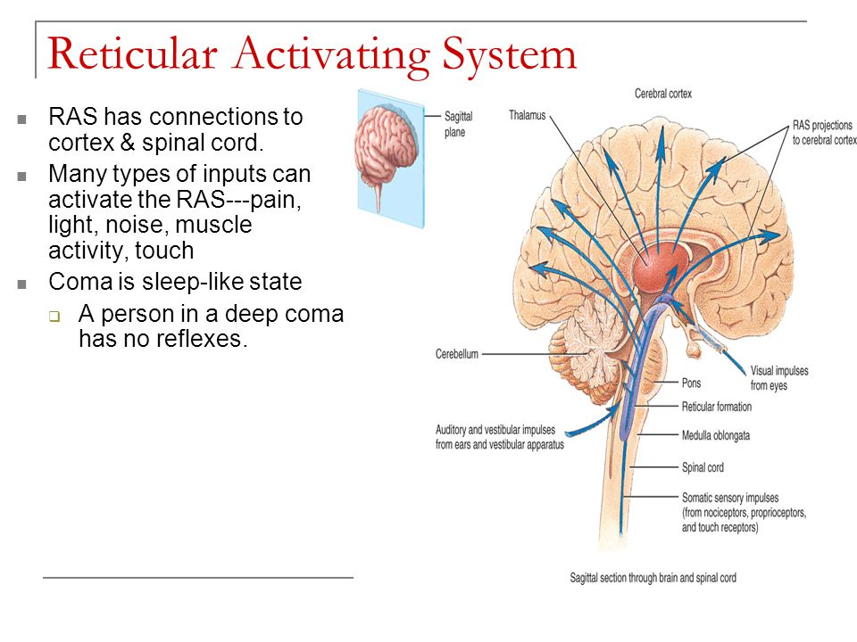 Chapter 16 Sensory Motor And Integrative Systems Ppt Video