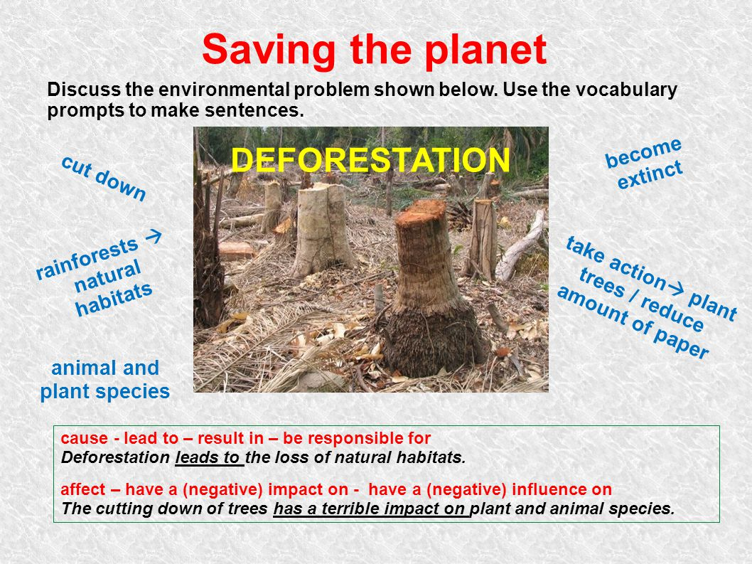 Saving the planet DEFORESTATION become extinct cut down rainforests 