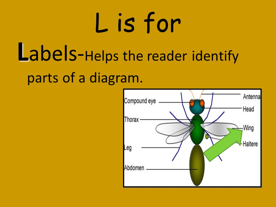 Labels-Helps the reader identify parts of a diagram.