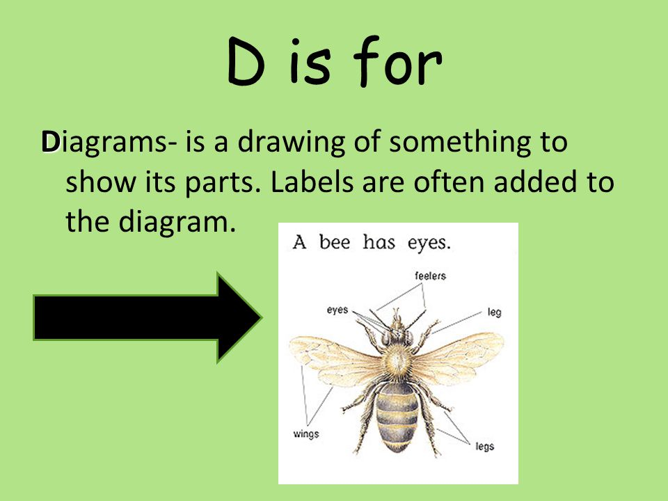 D is for Diagrams- is a drawing of something to show its parts.