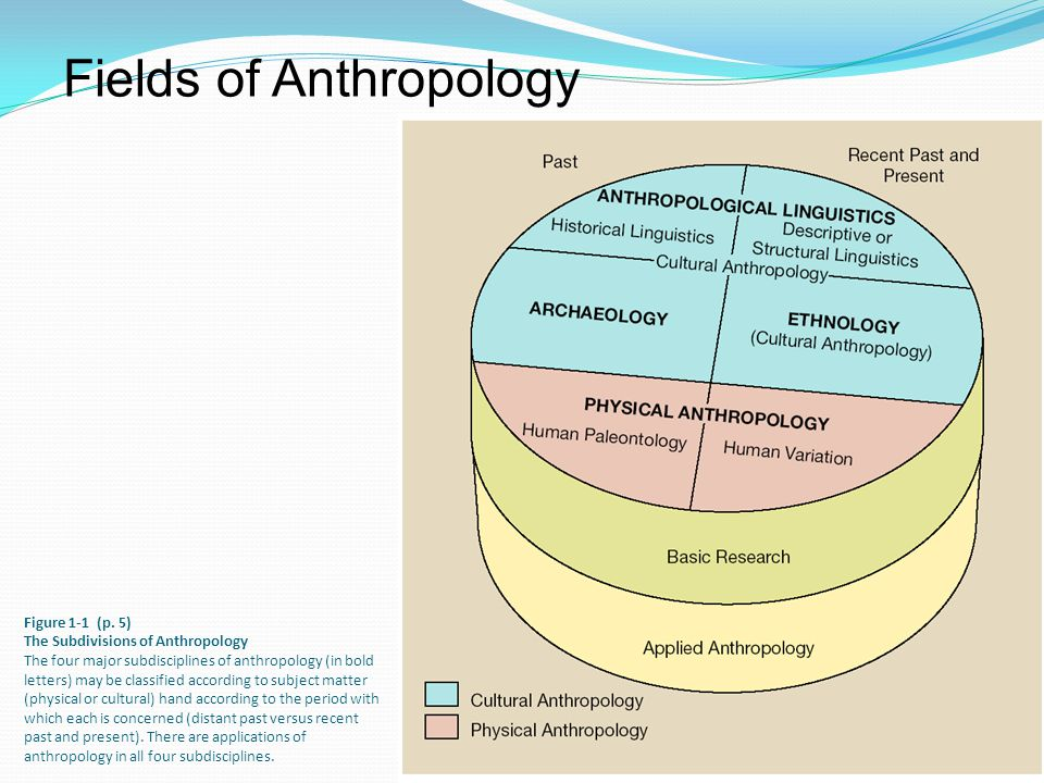4 subdivisions of anthropology