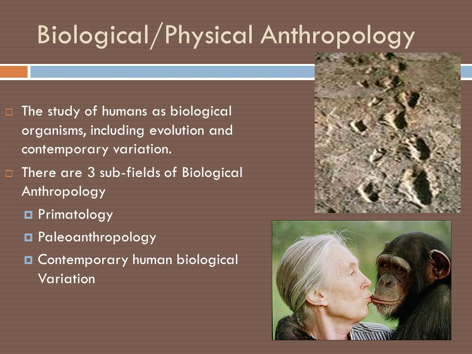 anthropology and its application to the Noted for its encouragement of interdisciplinary pursuits, its cutting-edge theoretical training, and its emphasis on rigorous language study and fieldwork, the phd the department of anthropology also has formal ties to the american museum of natural history, which affords additional opportunity for.