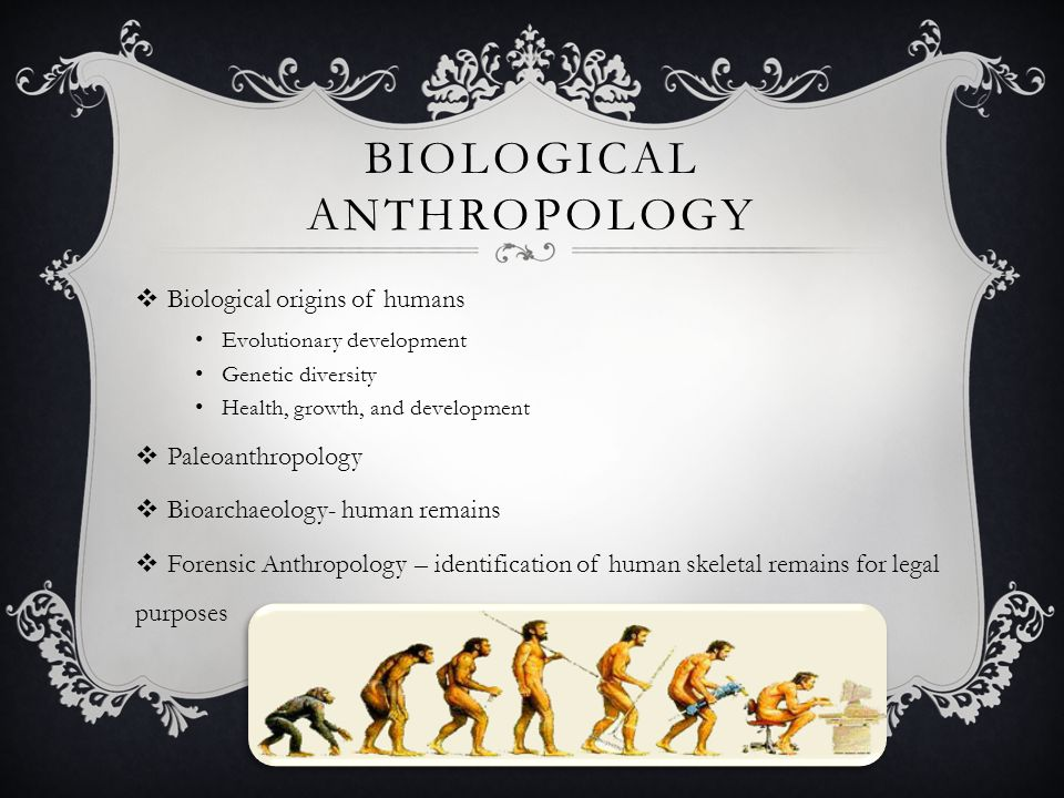 5 fields of anthropology