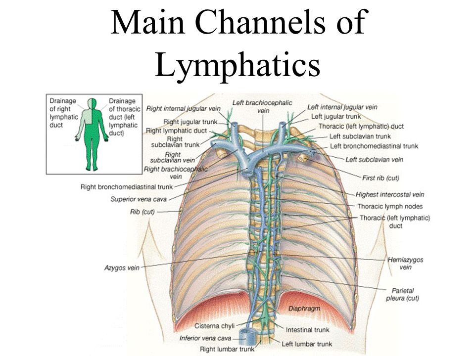 Lymphatic System Chapter Ppt Video Online Download