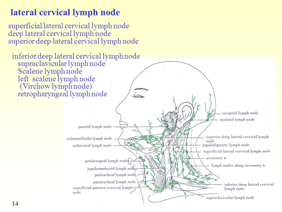 lateral cervical lymph node
