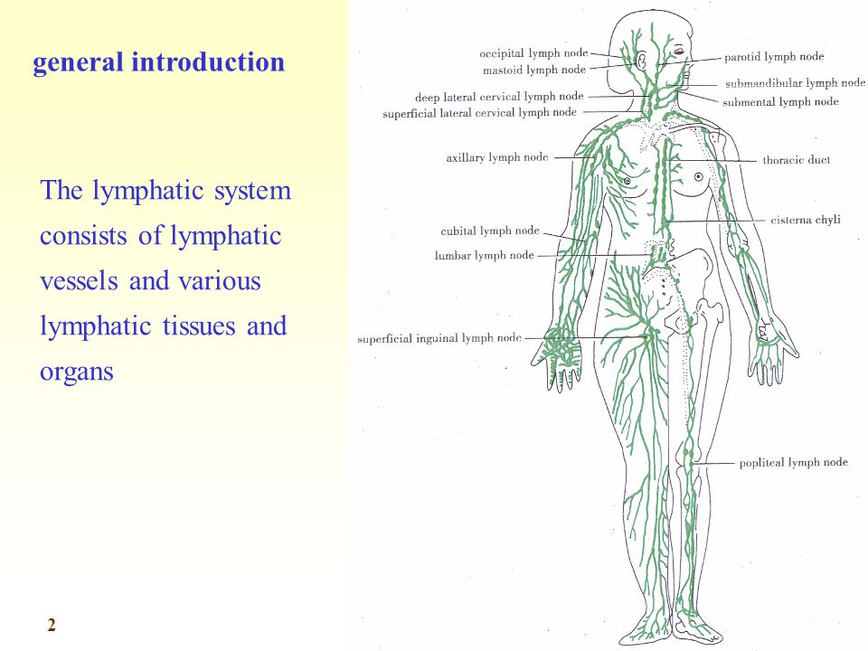 general introduction The lymphatic system consists of lymphatic vessels and various lymphatic tissues and organs.