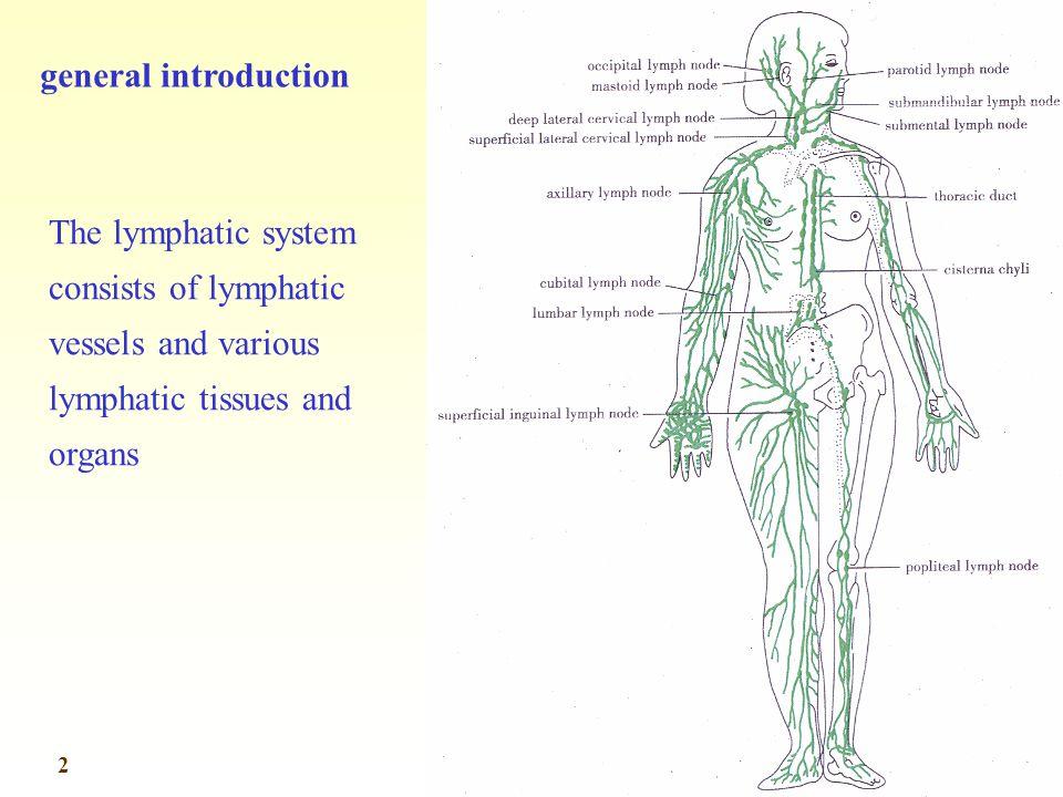 Cubital Lymph Nodes Location Diagram Product Wiring Diagrams