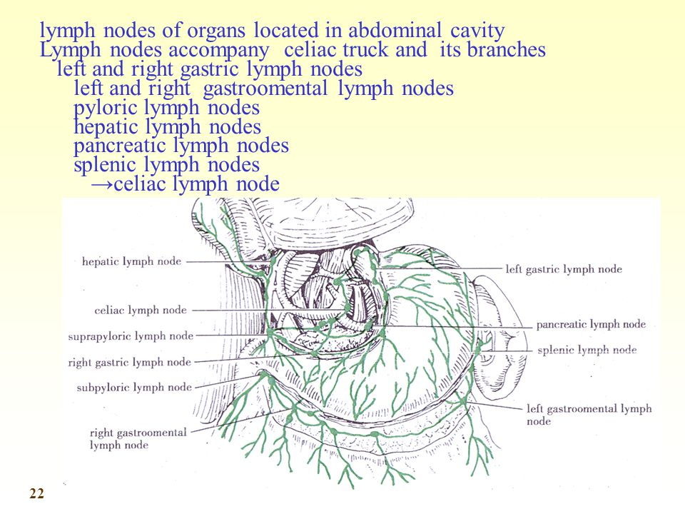 lymph nodes of organs located in abdominal cavity