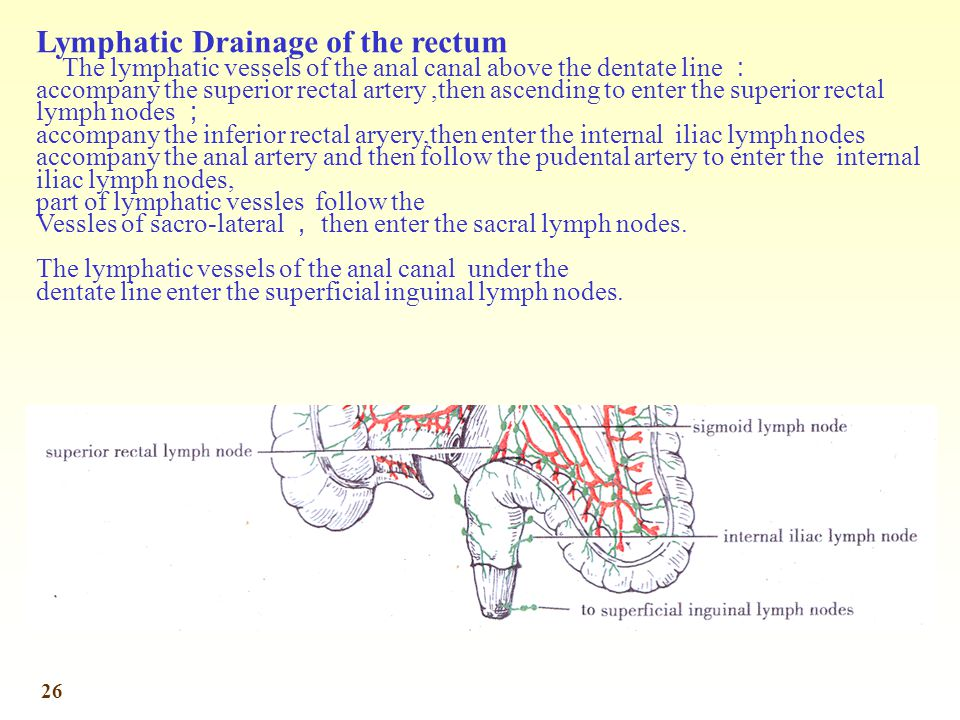 Lymphatic Drainage of the rectum
