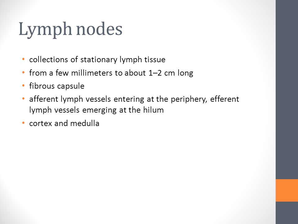 Lymph nodes collections of stationary lymph tissue