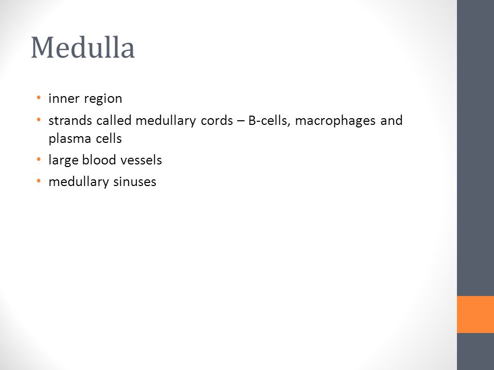 Medulla inner region. strands called medullary cords – B-cells, macrophages and plasma cells. large blood vessels.