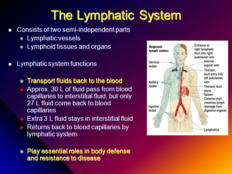 The Lymphatic System and Body Defenses - ppt video online download