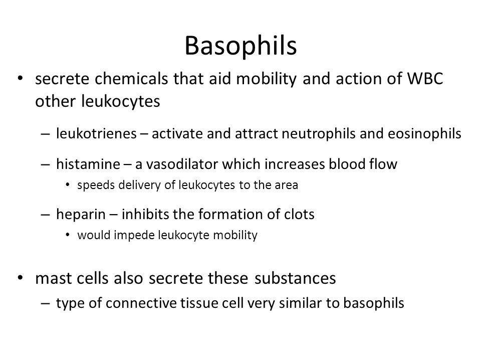Basophils secrete chemicals that aid mobility and action of WBC other leukocytes. leukotrienes – activate and attract neutrophils and eosinophils.