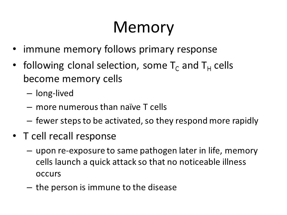 Memory immune memory follows primary response