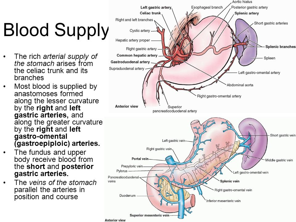 Stomach Anatomy and Pathology - ppt video online download