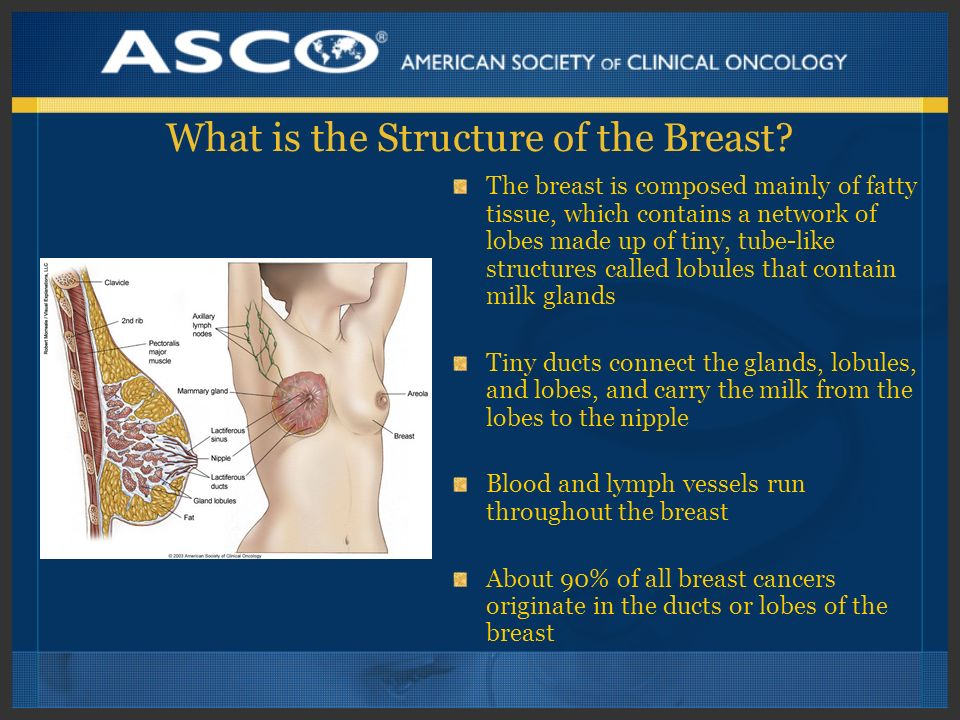 What is the Structure of the Breast