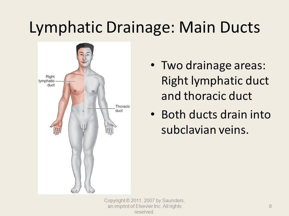 Lymphatic Drainage: Main Ducts