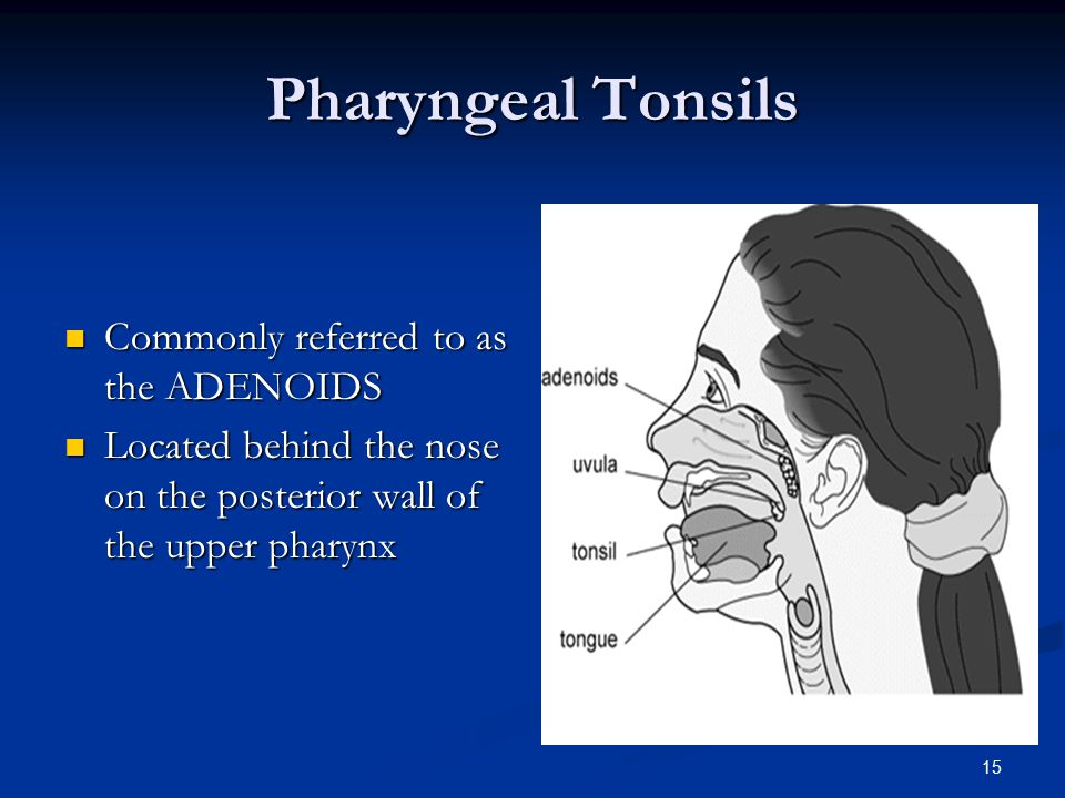 Pharyngeal Tonsils Commonly referred to as the ADENOIDS
