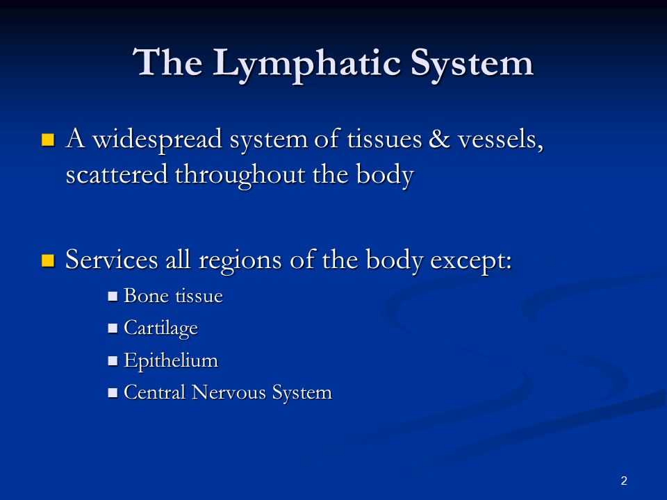 The Lymphatic System A widespread system of tissues & vessels, scattered throughout the body. Services all regions of the body except:
