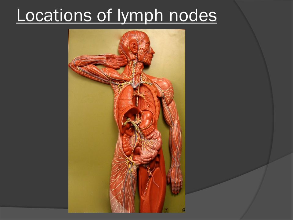 location of lymph nodes - 960×720