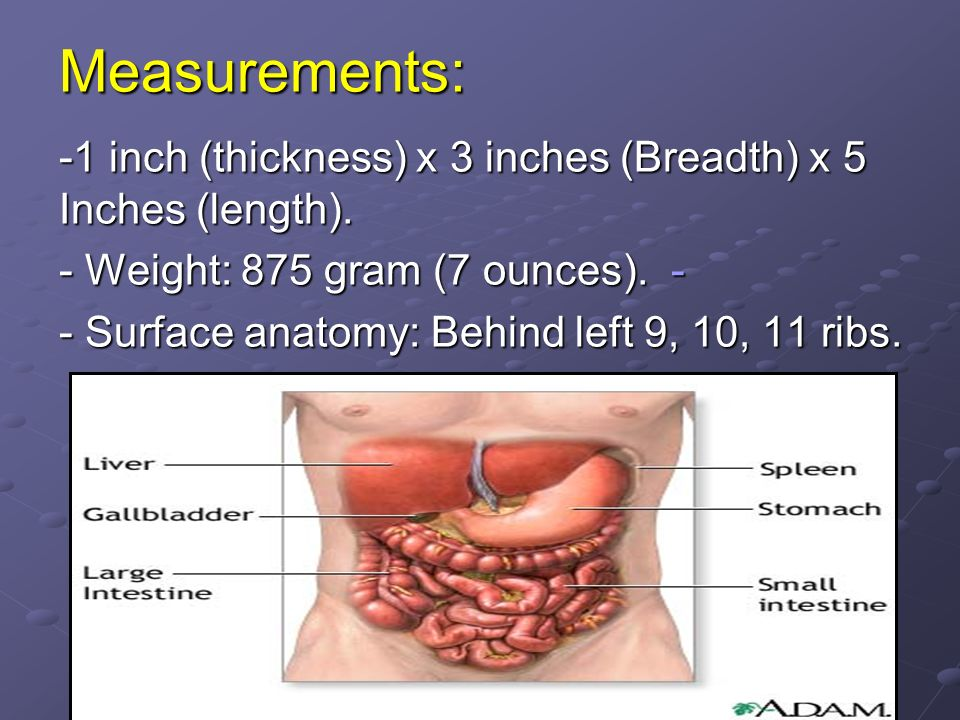 Measurements: -1 inch (thickness) x 3 inches (Breadth) x 5 Inches (length). - Weight: 875 gram (7 ounces).