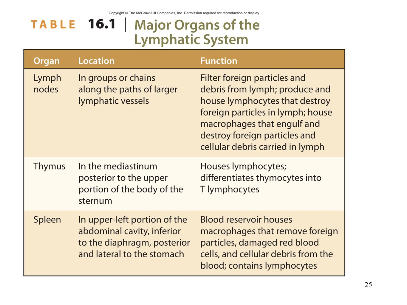 major function of lymphatic system
