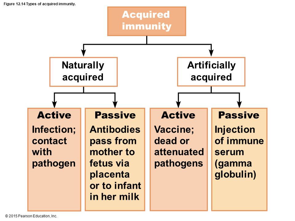 Figure Types of acquired immunity.