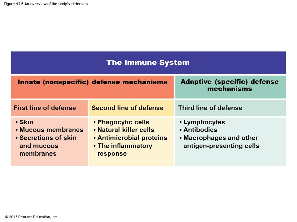 Figure 12.6 An overview of the body's defenses.