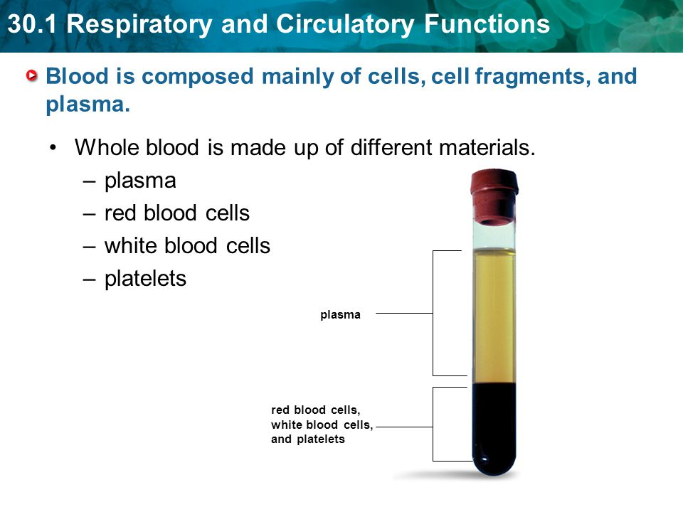Blood is composed mainly of cells, cell fragments, and plasma.