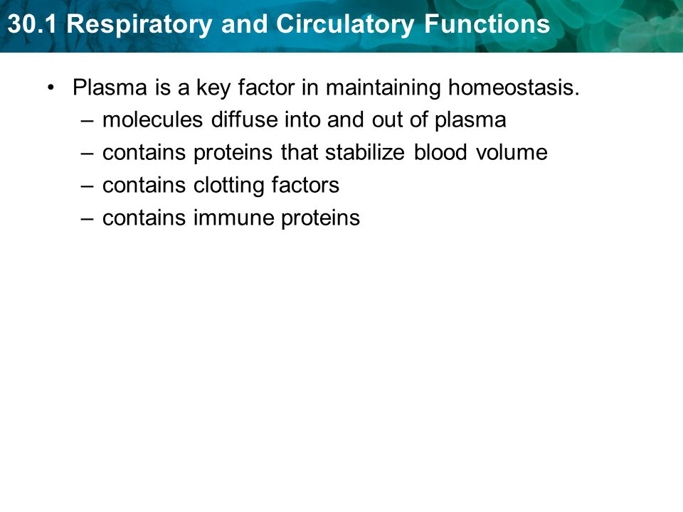 Plasma is a key factor in maintaining homeostasis.