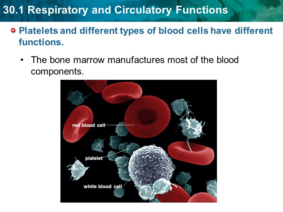 Platelets and different types of blood cells have different functions.