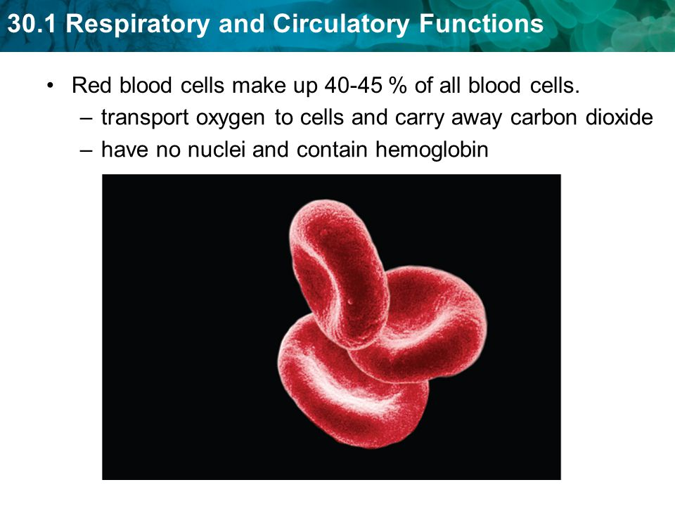 Red blood cells make up % of all blood cells.