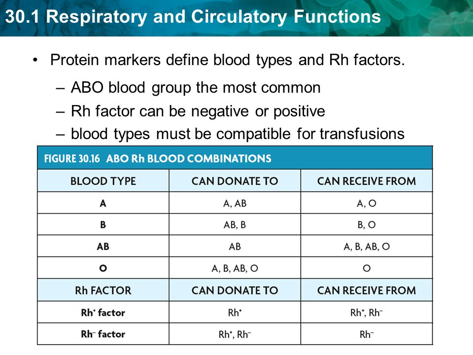 Protein markers define blood types and Rh factors.