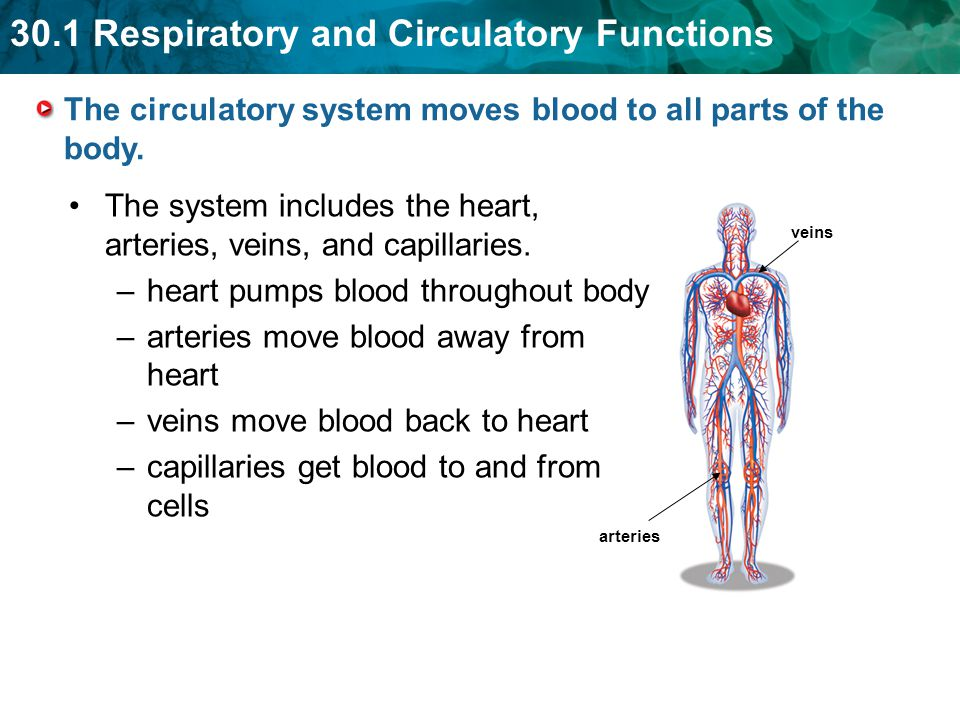 The circulatory system moves blood to all parts of the body.