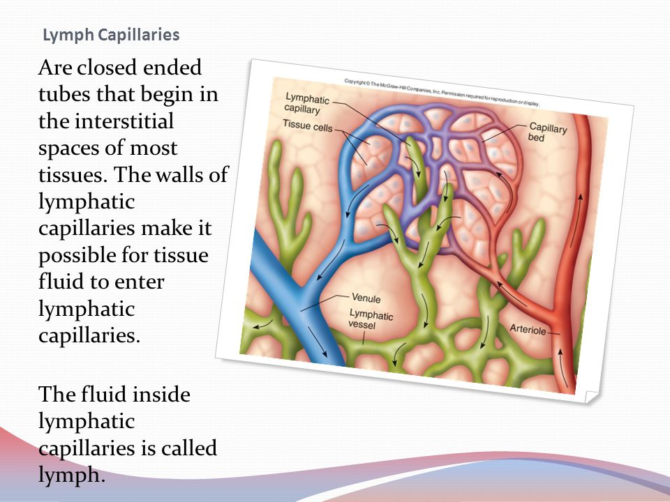 The fluid inside lymphatic capillaries is called lymph.