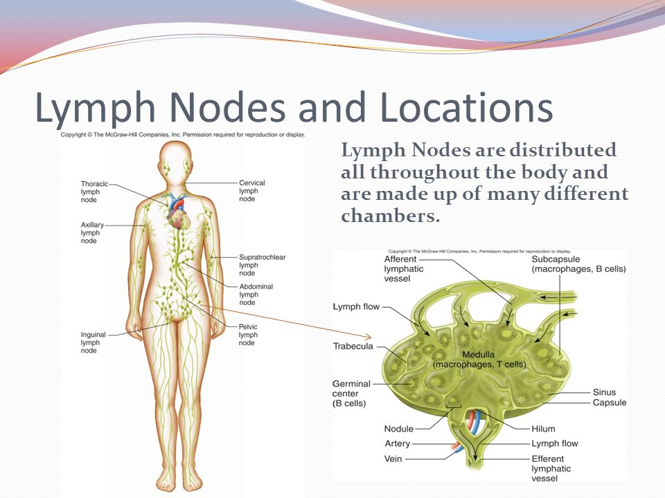Lymph Nodes and Locations