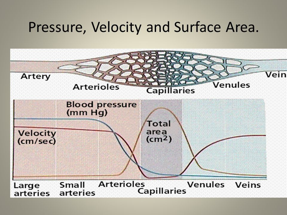 Pressure, Velocity and Surface Area.