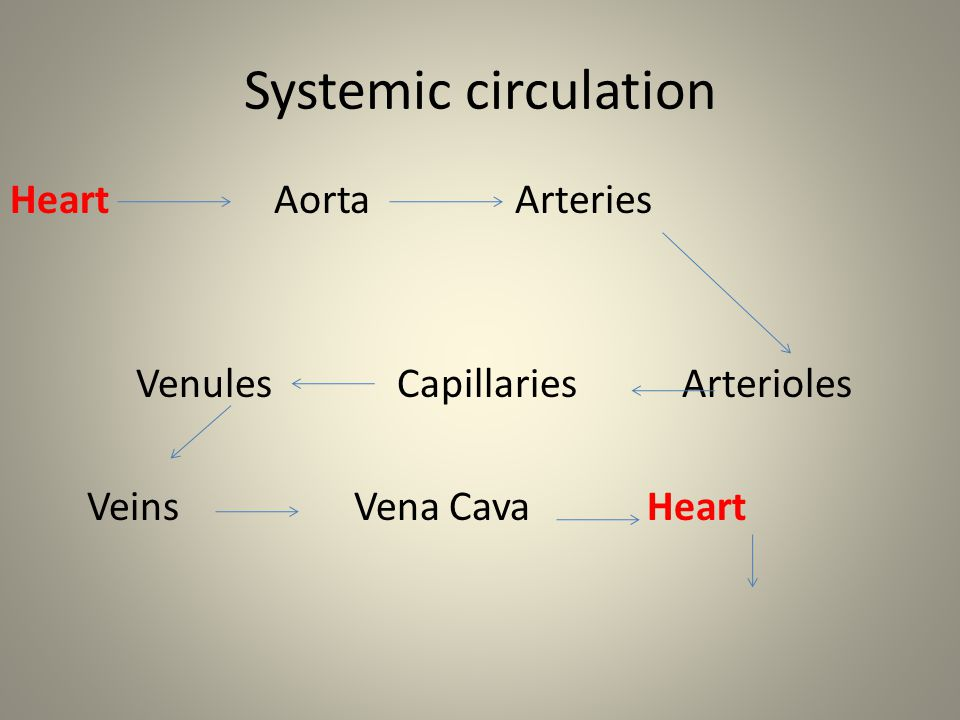 Systemic circulation Heart Aorta Arteries
