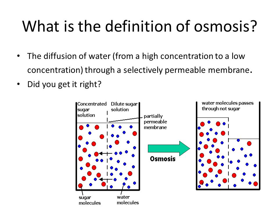 osmosis in sugar solution What's osmosis, anyway - for more information on reverse osmosis and reverse osmosis in now that we have our solution of sugar water, we'll grab a u-tube this is not an internet video of so there you are osmosis is when a solvent of low concentrated solute solution moves through a.