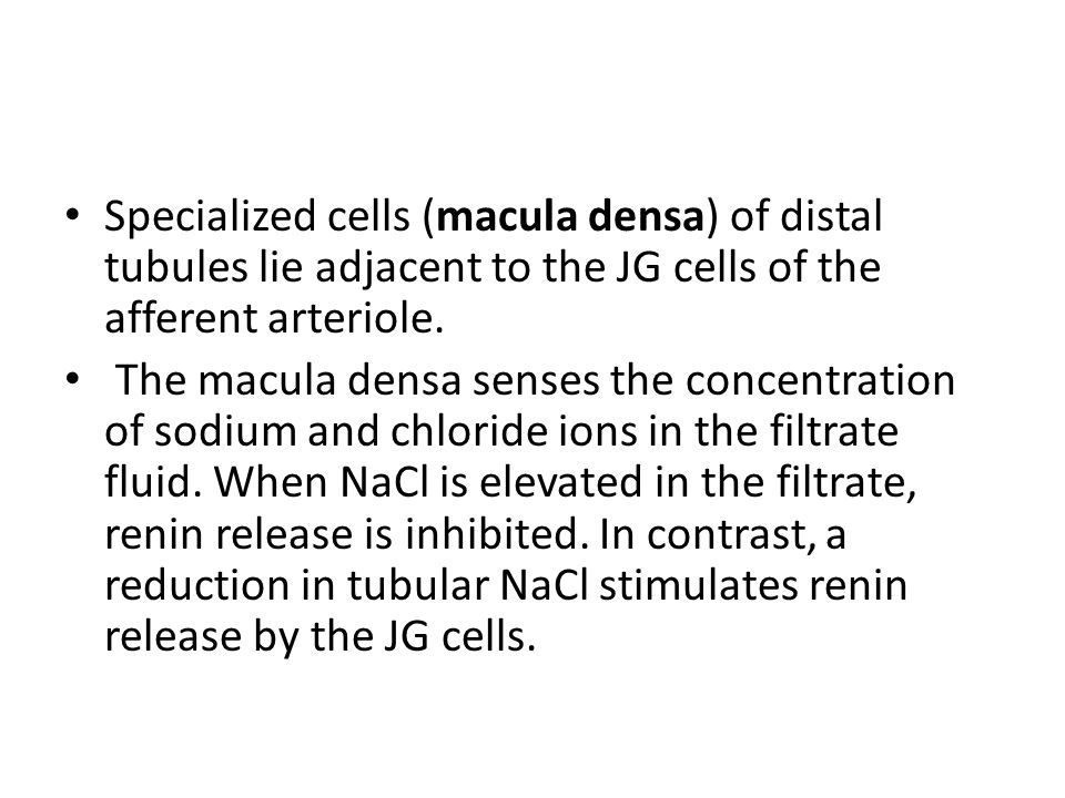 Specialized cells (macula densa) of distal tubules lie adjacent to the JG cells of the afferent arteriole.