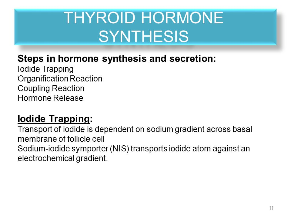 thyroid hormone synthesis Thyroid hormone synthesis and secretion the thyroid is largely composed of a collection of spherical structures known as follicles specialised follicular cells called epithelial cells surround each follicle.