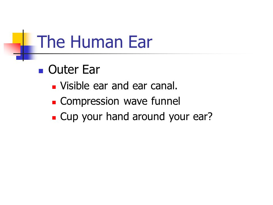 The Human Ear Outer Ear Visible ear and ear canal.