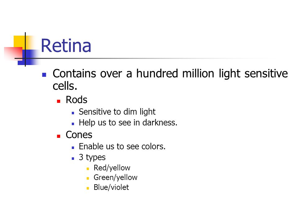 Retina Contains over a hundred million light sensitive cells. Rods