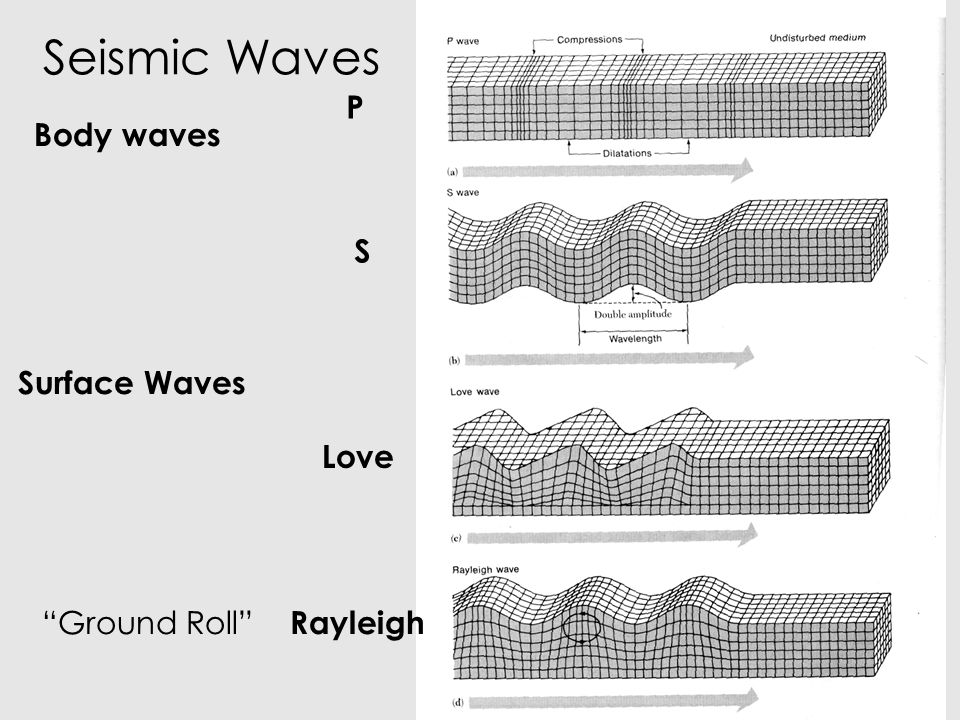 Seismic Waves P Body waves S Surface Waves Love Ground Roll Rayleigh