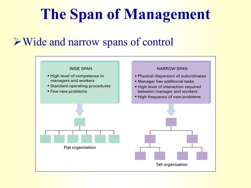 what is the span of management