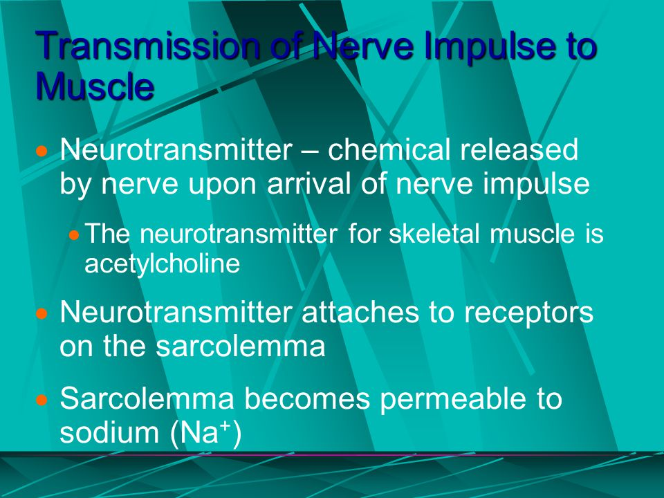 Transmission of Nerve Impulse to Muscle
