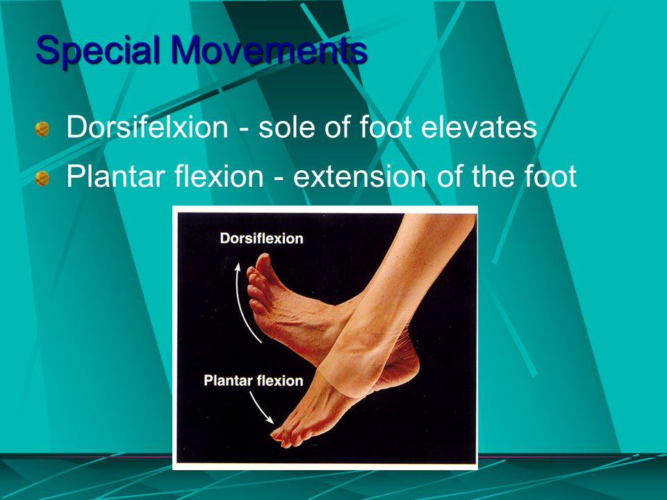 Special Movements Dorsifelxion - sole of foot elevates