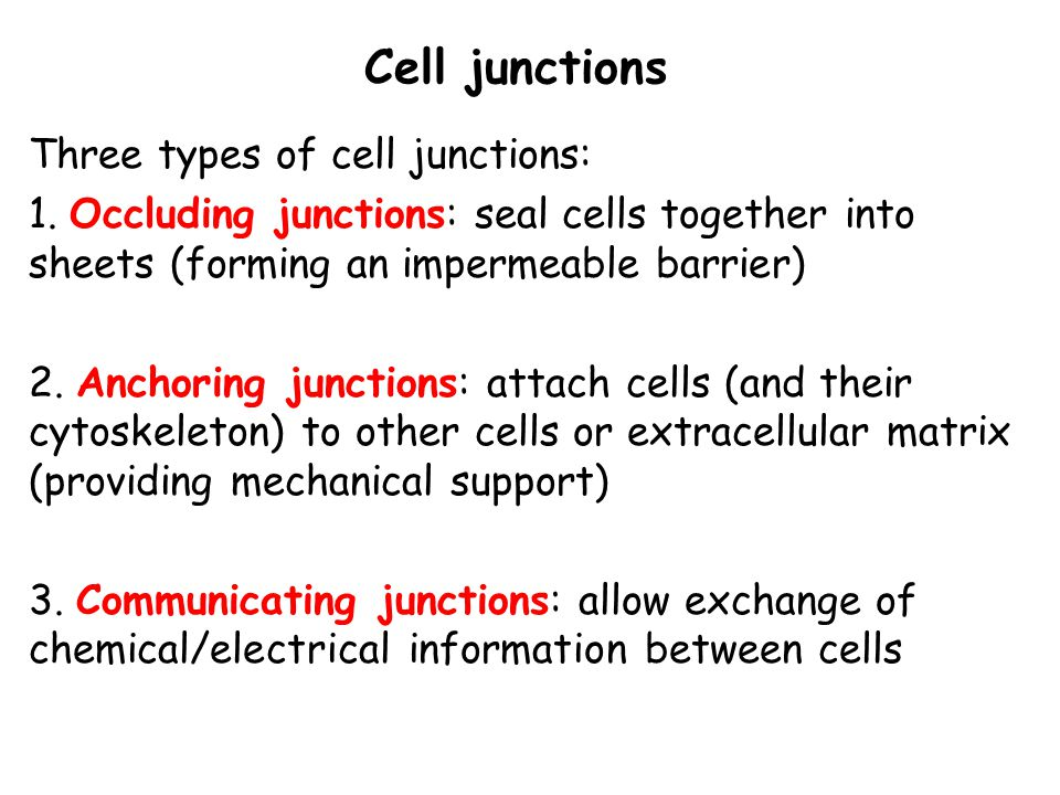 3 types of cell junctions